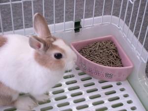 Why Choose Feed Pellet Machine For Making Rabbit Fodder?